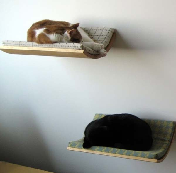 two pet beds