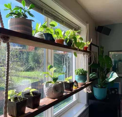 Indoor Shelf for Different Plants #window shelf #plants #homedecorimage