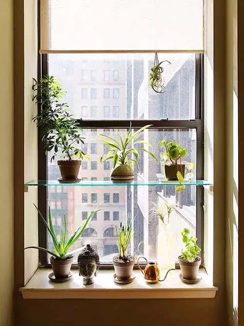 Singular Transparent Shelf #window shelf #plants #homedecorimage