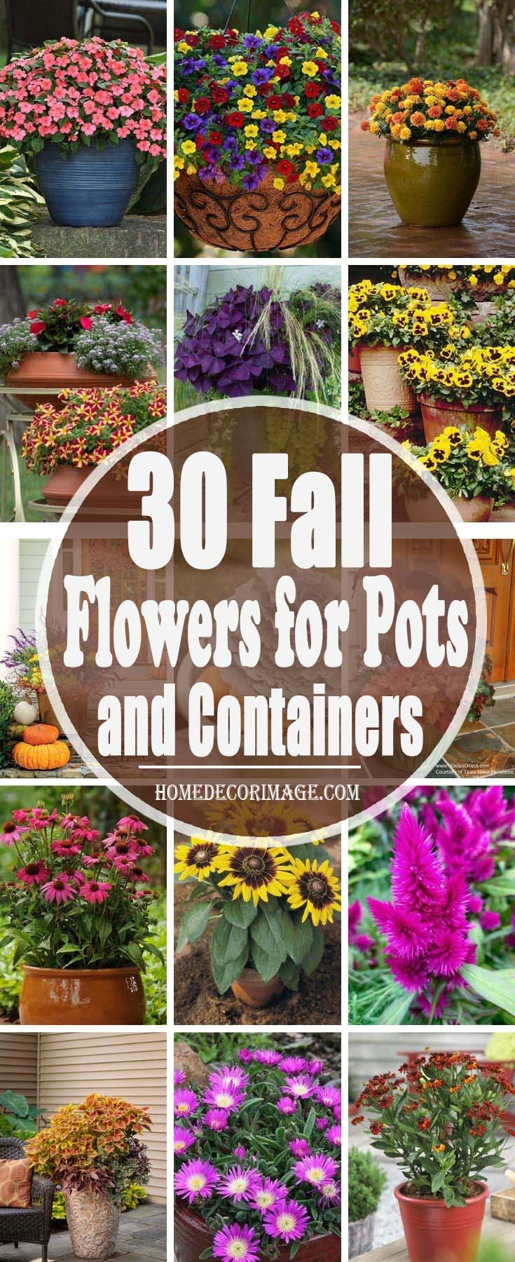 25 Fall Flowers for Pots and Containers To Add Color To The Rainy Season #fallflowerspots #homedecorimage