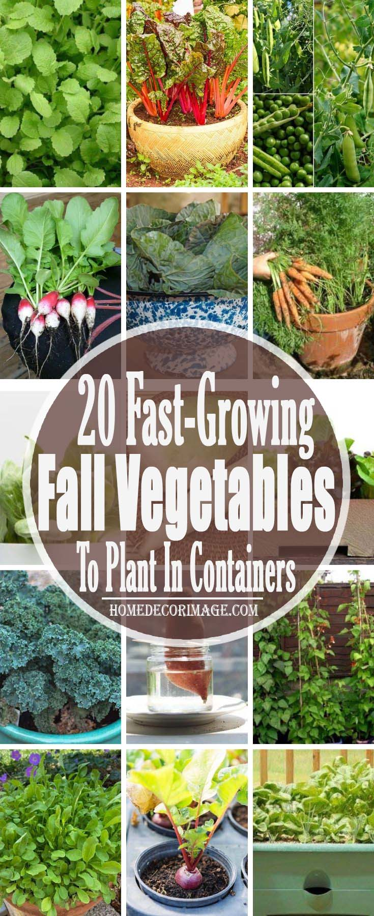 22 Fast Growing Fall Vegetables To Plant In Containers For All Autumn #fallvegetables #homedecorimage