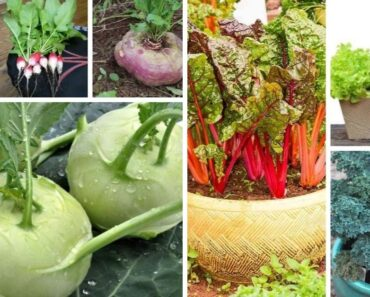 Fast Growing Fall Vegetables